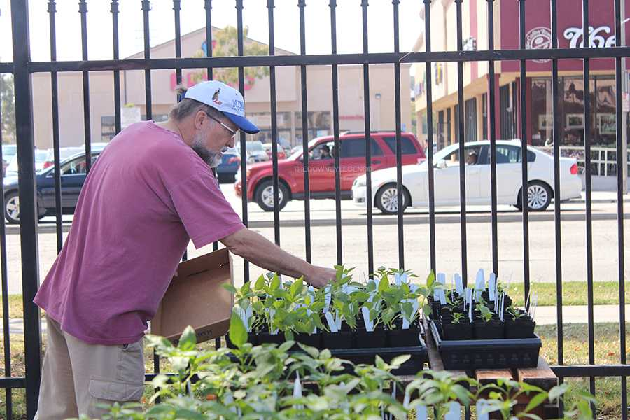 The annual plant sale held on March 16 by Downey high school Botany classes gave members of the community the opportunity to purchase their plants in the front parking lot. Mr. Pittengers Botany class began cultivating the plants in early Sept.  2012.