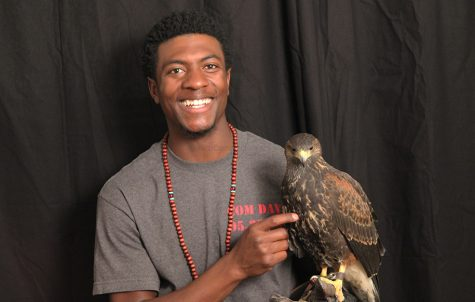 Falconry at Downey
