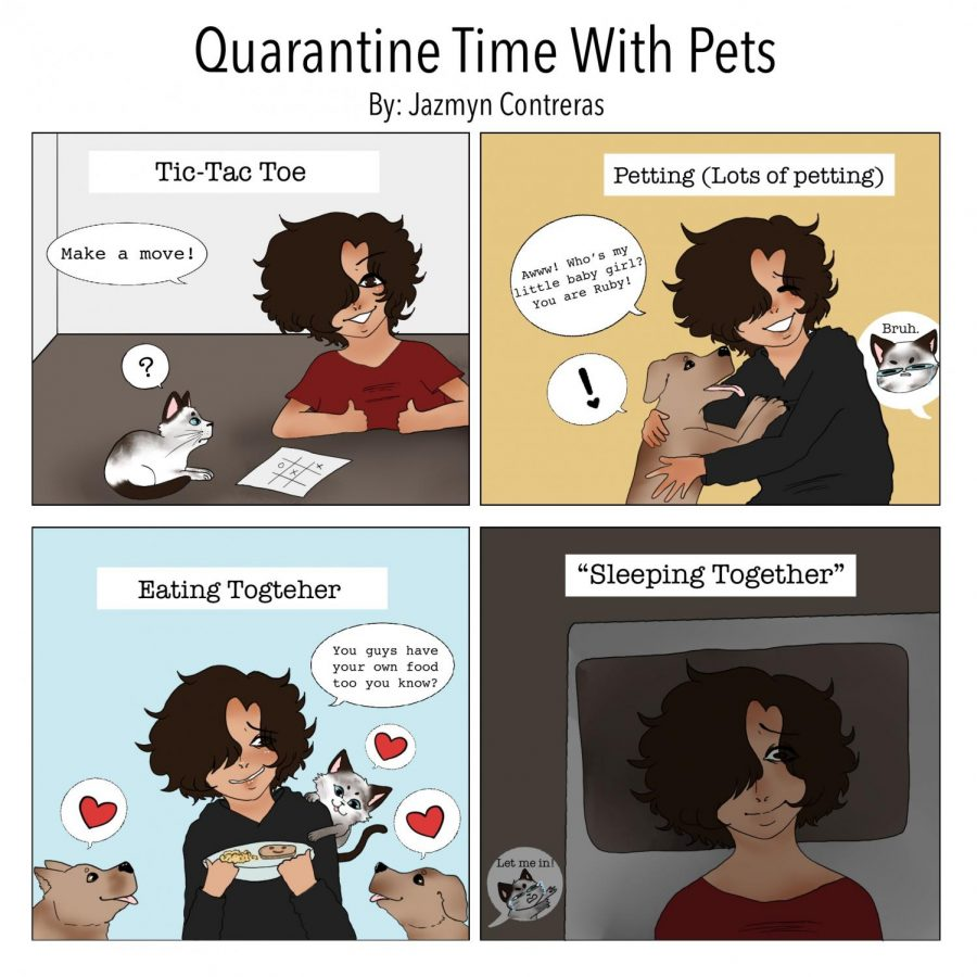 Quarantine Time With Pets